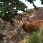 Parco Val Grande - fauna selvatica